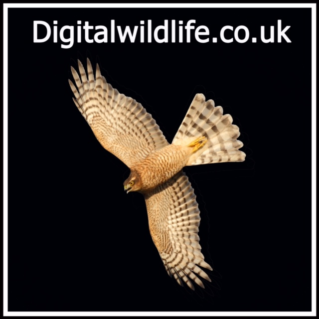 Digital Wildlife