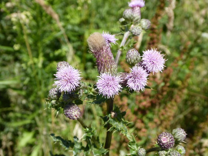 rsz_flowers2_8-7-17