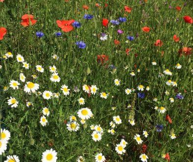 wildflowers (2)